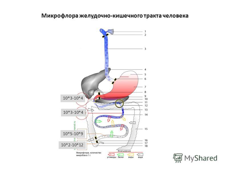 Микрофлора желудочно-кишечного тракта человека 10*3-10*4 10*5-10*9 10*2-10*12