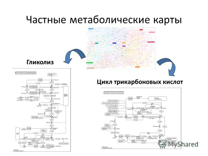 Частные метаболические карты Гликолиз Цикл трикарбоновых кислот