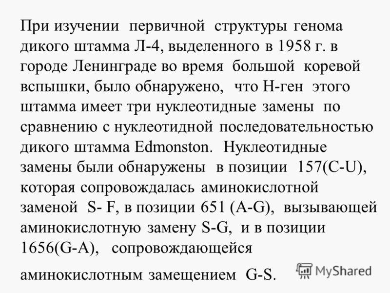 При изучении первичной структуры генома дикого штамма Л-4, выделенного в 1958 г. в городе Ленинграде во время большой коревой вспышки, было обнаружено, что Н-ген этого штамма имеет три нуклеотидные замены по сравнению с нуклеотидной последовательност