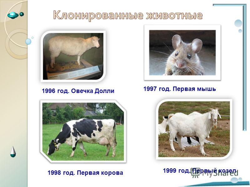 . 1996 год. Овечка Долли 1998 год. Первая корова 1997 год. Первая мышь 1999 год. Первый козел