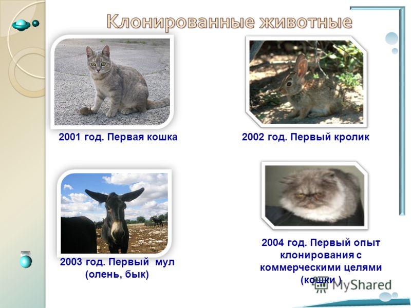 2001 год. Первая кошка2002 год. Первый кролик 2003 год. Первый мул (олень, бык) 2004 год. Первый опыт клонирования с коммерческими целями (кошки )