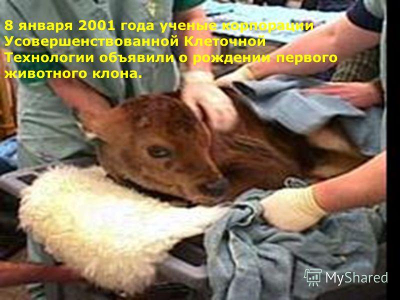 8 января 2001 года ученые корпорации Усовершенствованной Клеточной Технологии объявили о рождении первого животного клона.