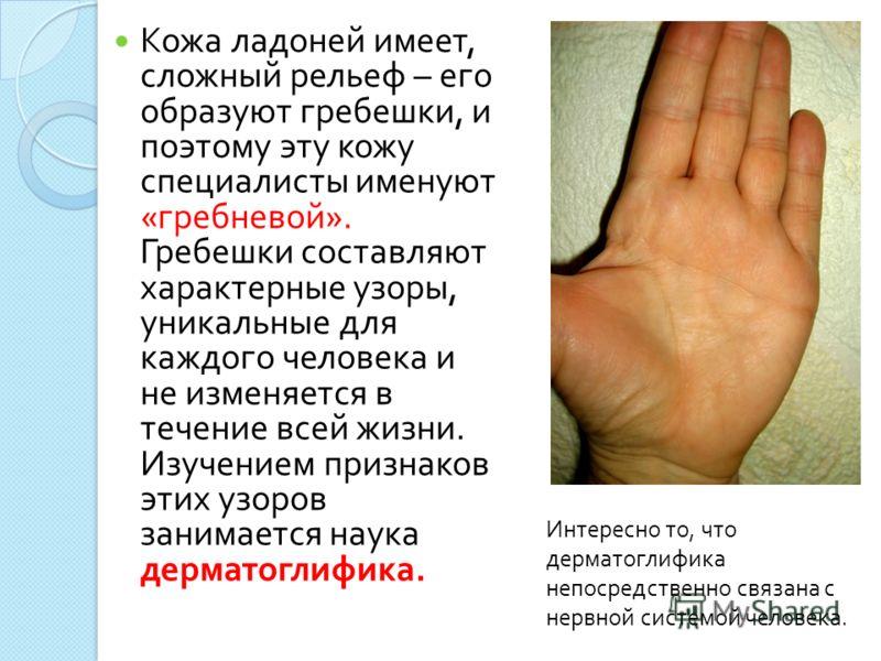Кожа ладоней имеет, сложный рельеф – его образуют гребешки, и поэтому эту кожу специалисты именуют « гребневой ». Гребешки составляют характерные узоры, уникальные для каждого человека и не изменяется в течение всей жизни. Изучением признаков этих уз