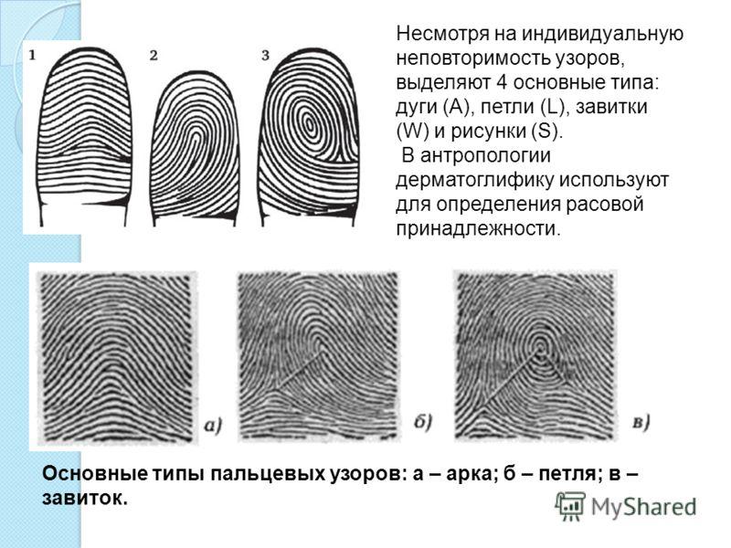 Несмотря на индивидуальную неповторимость узоров, выделяют 4 основные типа: дуги (А), петли (L), завитки (W) и рисунки (S). В антропологии дерматоглифику используют для определения расовой принадлежности. Основные типы пальцевых узоров: а – арка; б –