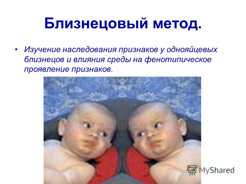 Близнецовый метод. Изучение наследования признаков у однояйцевых близнецов и влияния среды на фенотипическое проявление признаков.
