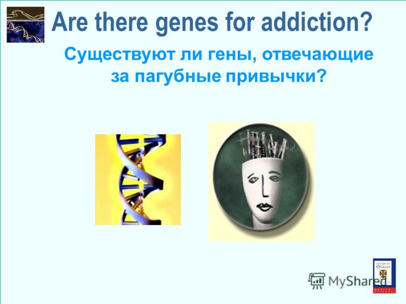 Are there genes for addiction? Существуют ли гены, отвечающие за пагубные привычки?