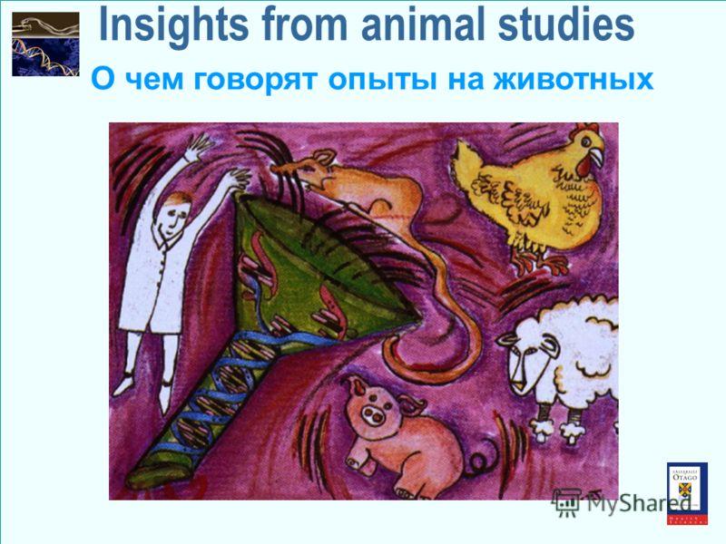 Insights from animal studies О чем говорят опыты на животных