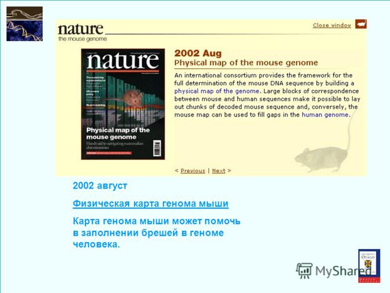 2002 август Физическая карта генома мыши Карта генома мыши может помочь в заполнении брешей в геноме человека.