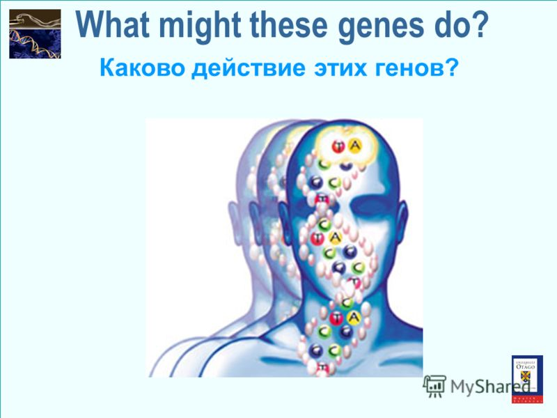What might these genes do? Каково действие этих генов?