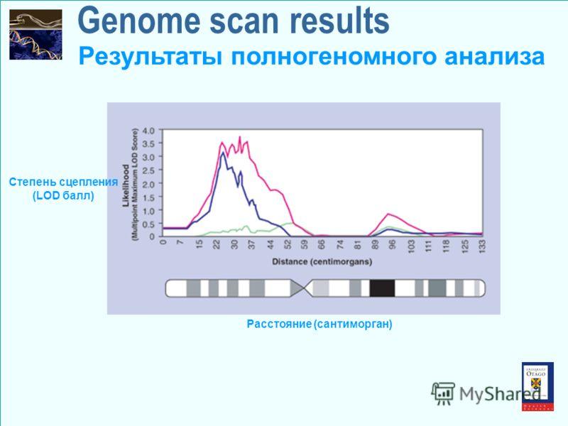 Genome scan results Степень сцепления (LOD балл) Расстояние (сантиморган) Результаты полногеномного анализа