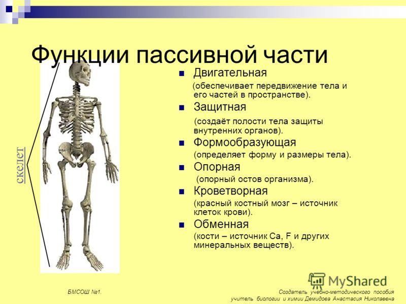Функции пассивной части Двигательная (обеспечивает передвижение тела и его частей в пространстве). Защитная (создаёт полости тела защиты внутренних органов). Формообразующая (определяет форму и размеры тела). Опорная (опорный остов организма). Кровет