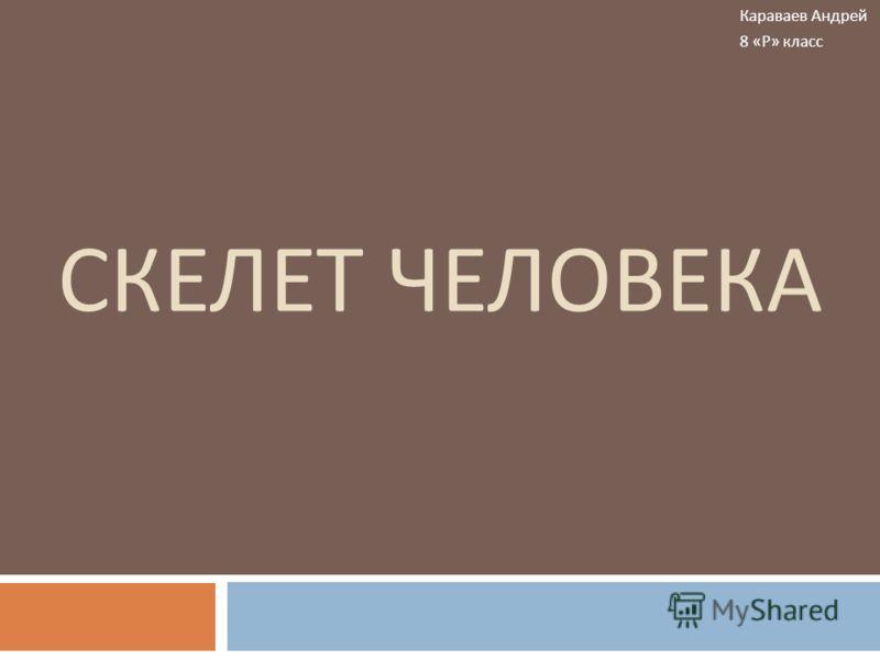 СКЕЛЕТ ЧЕЛОВЕКА Караваев Андрей 8 « Р » класс