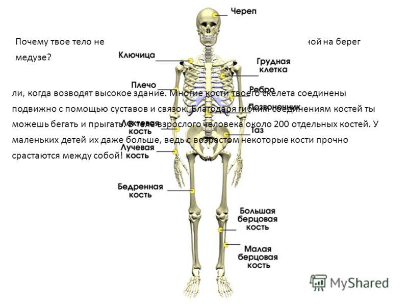 Почему твое тело не расплывается в лепешку, подобно выброшенной на берег медузе? ли, когда возводят высокое здание. Многие кости твоего скелета соединены подвижно с помощью суставов и связок. Благодаря гибким соединениям костей ты можешь бегать и пры