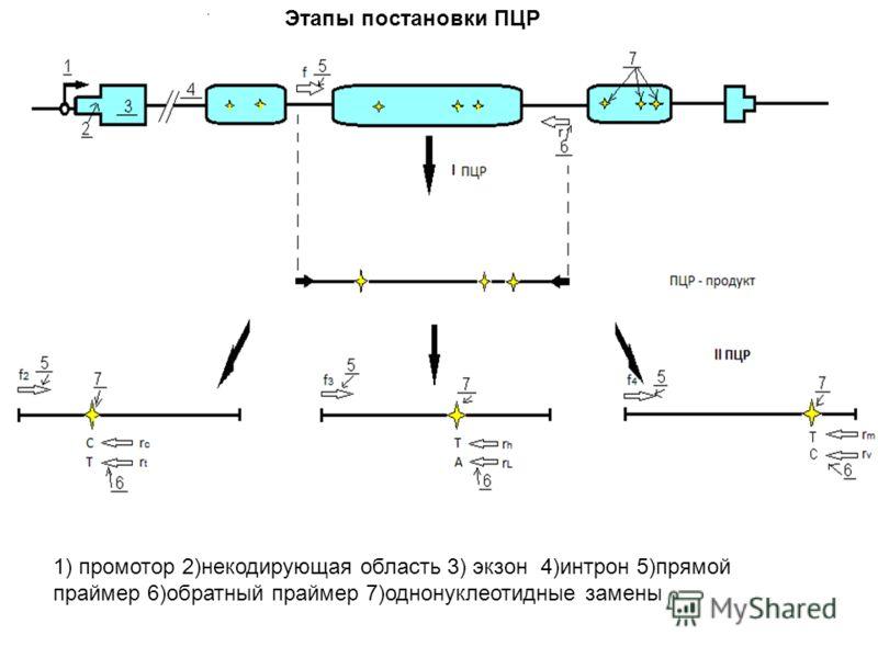 Этапы постановки ПЦР 1) промотор 2)некодирующая область 3) экзон 4)интрон 5)прямой праймер 6)обратный праймер 7)однонуклеотидные замены