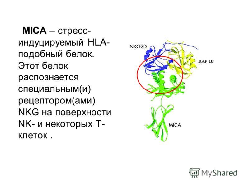 MICA – стресс- индуцируемый HLA- подобный белок. Этот белок распознается специальным(и) рецептором(ами) NKG на поверхности NK- и некоторых Т- клеток.