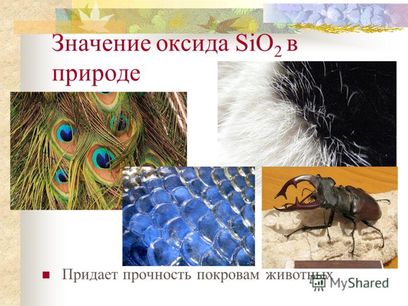 Значение оксида SiO 2 в природе Придает прочность стеблям растений