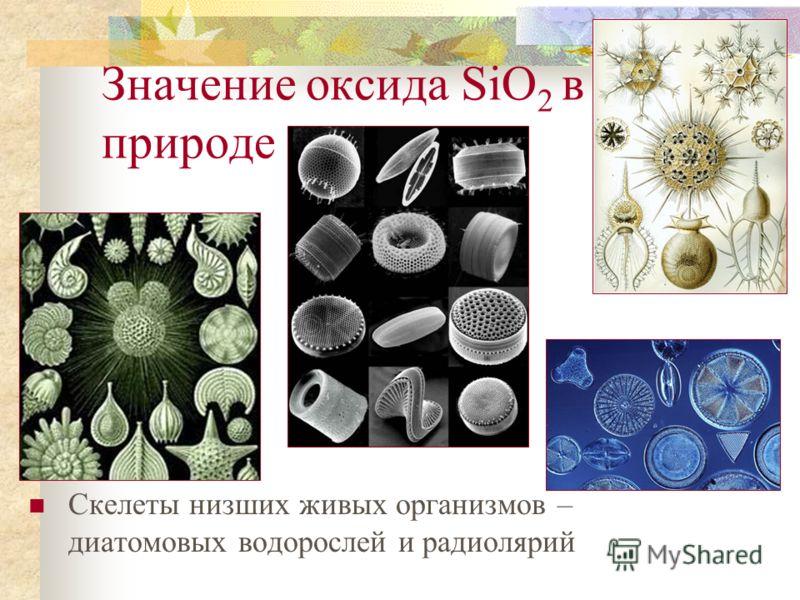 Значение оксида SiO 2 в природе Придает гладкость и прочность костям человека