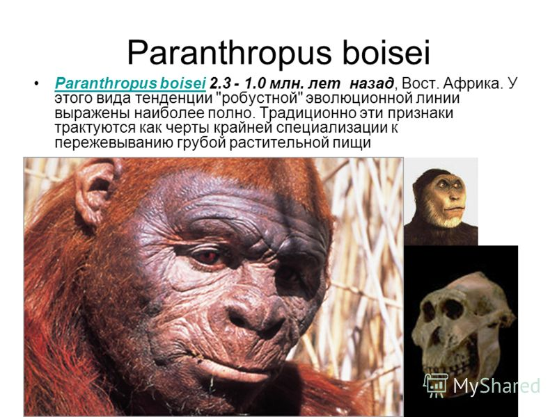 Paranthropus boisei Paranthropus boisei 2.3 - 1.0 млн. лет назад, Вост. Африка. У этого вида тенденции