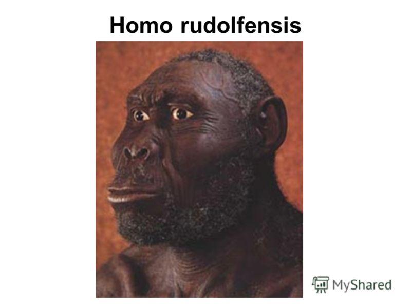 Homo rudolfensis