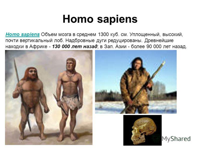 Homo sapiens Homo sapiens Объем мозга в среднем 1300 куб. см. Уплощенный, высокий, почти вертикальный лоб. Надбровные дуги редуцированы. Древнейшие находки в Африке - 130 000 лет назад; в Зап. Азии - более 90 000 лет назад.