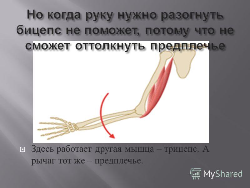 Здесь работает другая мышца – трицепс. А рычаг тот же – предплечье.