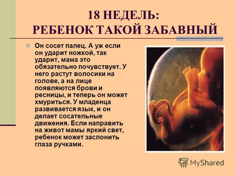 18 НЕДЕЛЬ: РЕБЕНОК ТАКОЙ ЗАБАВНЫЙ Он сосет палец. А уж если он ударит ножкой, так ударит, мама это обязательно почувствует. У него растут волосики на голове, а на лице появляются брови и ресницы, и теперь он может хмуриться. У младенца развивается яз
