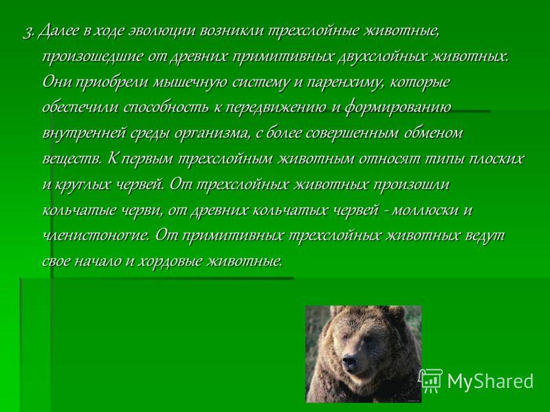 3. Далее в ходе эволюции возникли трехслойные животные, произошедшие от древних примитивных двухслойных животных. Они приобрели мышечную систему и паренхиму, которые обеспечили способность к передвижению и формированию внутренней среды организма, с б