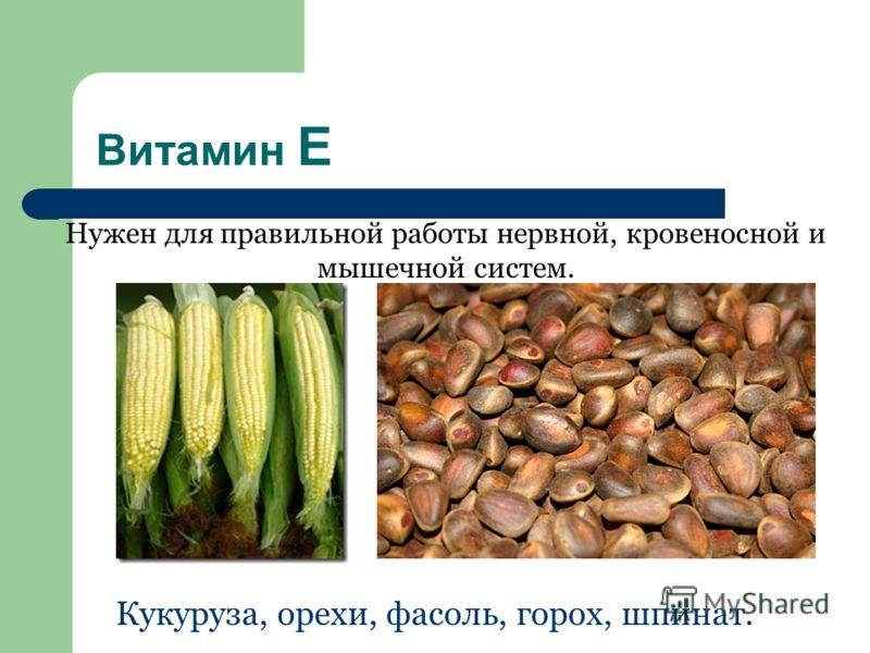 Витамин Е Нужен для правильной работы нервной, кровеносной и мышечной систем. Кукуруза, орехи, фасоль, горох, шпинат.