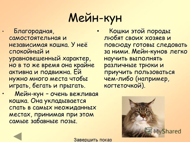 Мейн-кун Благородная, самостоятельная и независимая кошка. У неё спокойный и уравновешенный характер, но в то же время она крайне активна и подвижна. Ей нужно много места чтобы играть, бегать и прыгать. Мейн-кун – очень вежливая кошка. Она укладывает