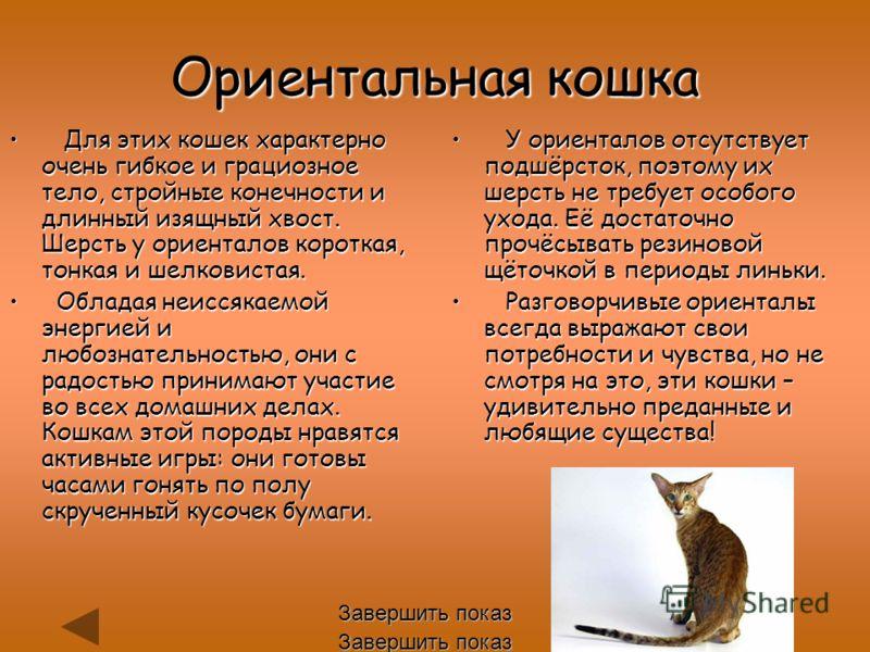 Ориентальная кошка Для этих кошек характерно оченьгибкое и грациозное тело, стройные конечности и длинный изящный хвост. Шерсть у ориенталов короткая, тонкая и шелковистая. Для этих кошек характерно очень гибкое и грациозное тело, стройные конечности