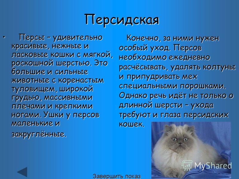 Персы – удивительно красивые, нежные и ласковые кошки с мягкой, роскошной шерстью. Это большие и сильные животные с коренастым туловищем, широкой грудью, массивными плечами и крепкими ногами. Ушки у персов маленькие и закруглённые. Персы – удивительн