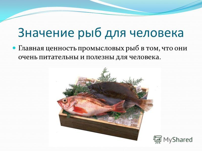 Значение рыб для человека Главная ценность промысловых рыб в том, что они очень питательны и полезны для человека.