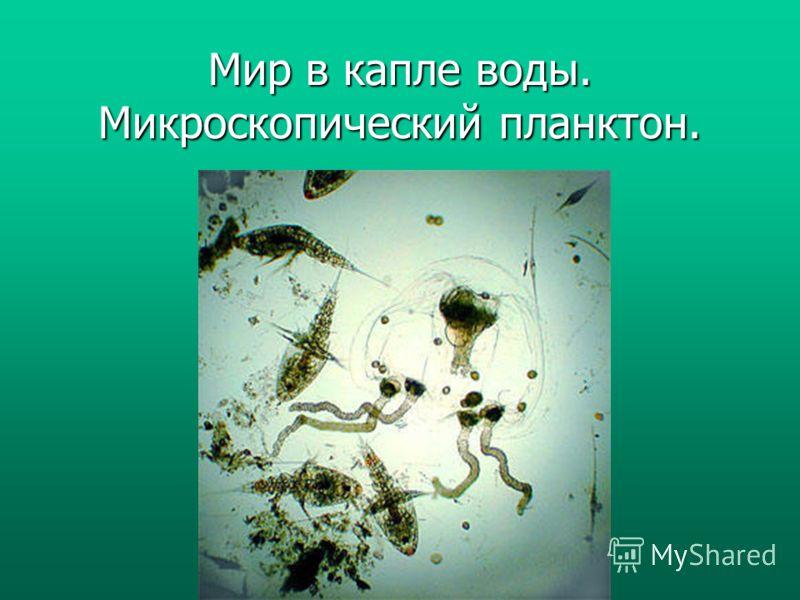 Мир в капле воды. Микроскопический планктон.