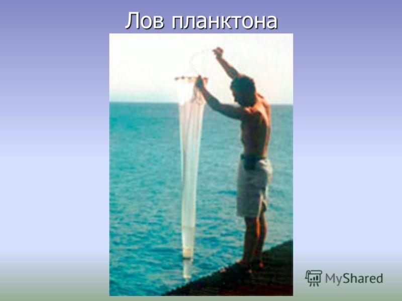 Лов планктона
