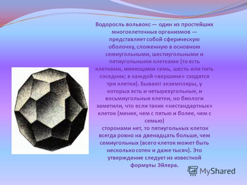 Водоросль вольвокс один из простейших многоклеточных организмов представляет собой сферическую оболочку, сложенную в основном семиугольными, шестиугольными и пятиугольными клетками ( то есть клетками, имеющими семь, шесть или пять соседних ; в каждой