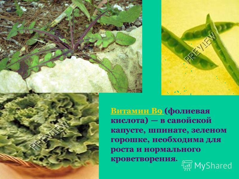 Витамин В9 Витамин В9 (фолиевая кислота) в савойской капусте, шпинате, зеленом горошке, необходима для роста и нормального кроветворения.