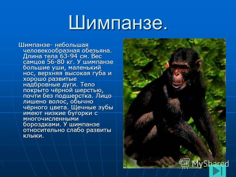Численность орангутангов. Орангутанги распространены на островах Суматра и Калимантан. В последнее время орангутанги подвергаются быстрому истреблению. За последние 100 лет численность орангутангов резко упала и к настоящему времени на Суматре их сох