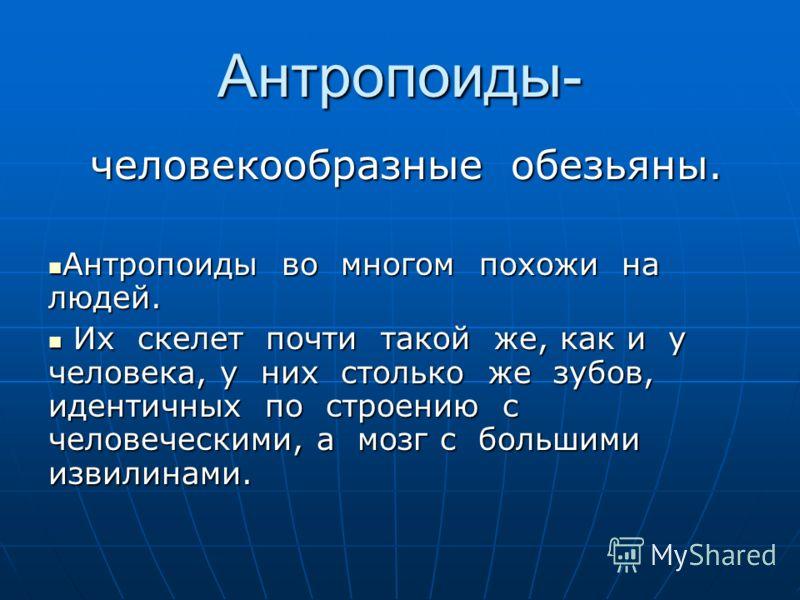 Антропоиды.
