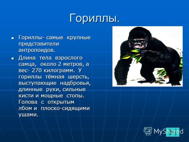 Существует 4 вида антропоидов: горилла горилла горилла горилла орангутанг орангутангорангутанг шимпанзе шимпанзешимпанзе гиббон гиббонгиббон