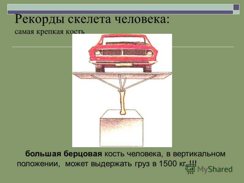 Рекорды скелета человека: самая крепкая кость большая берцовая кость человека, в вертикальном положении, может выдержать груз в 1500 кг. !!!