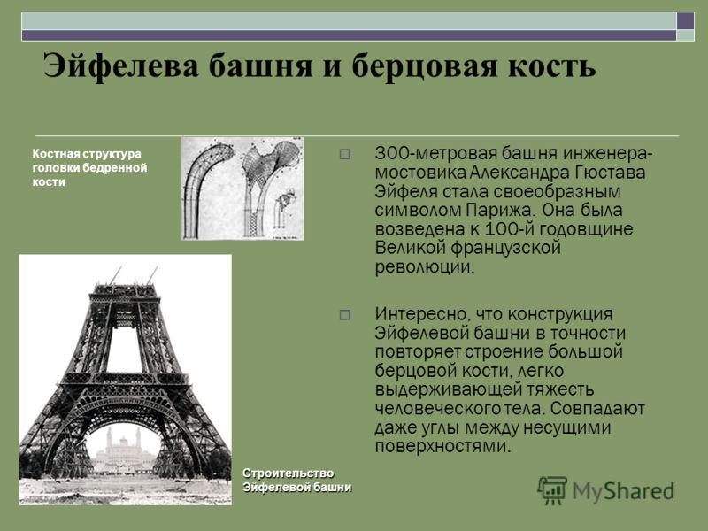 Эйфелева башня и берцовая кость 300-метровая башня инженера- мостовика Александра Гюстава Эйфеля стала своеобразным символом Парижа. Она была возведена к 100-й годовщине Великой французской революции. Интересно, что конструкция Эйфелевой башни в точн