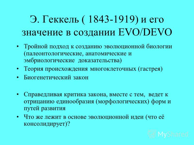 Э. Геккель ( 1843-1919) и его значение в создании EVO/DEVO Тройной подход к созданию эволюционной биологии (палеонтологические, анатомические и эмбриологические доказательства) Теория происхождения многоклеточных (гастрея) Биогенетический закон Справ