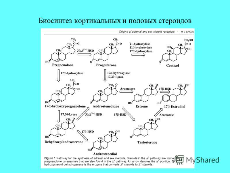 Биосинтез кортикальных и половых стероидов
