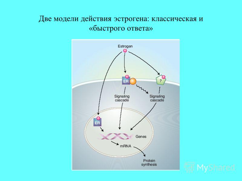 Две модели действия эстрогена: классическая и «быстрого ответа»