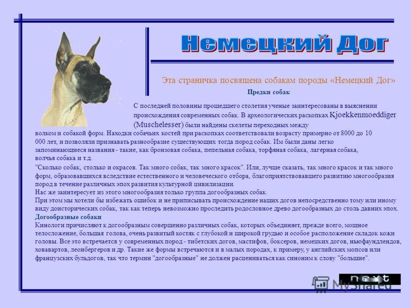 Эта страничка посвящена собакам породы «Немецкий Дог»