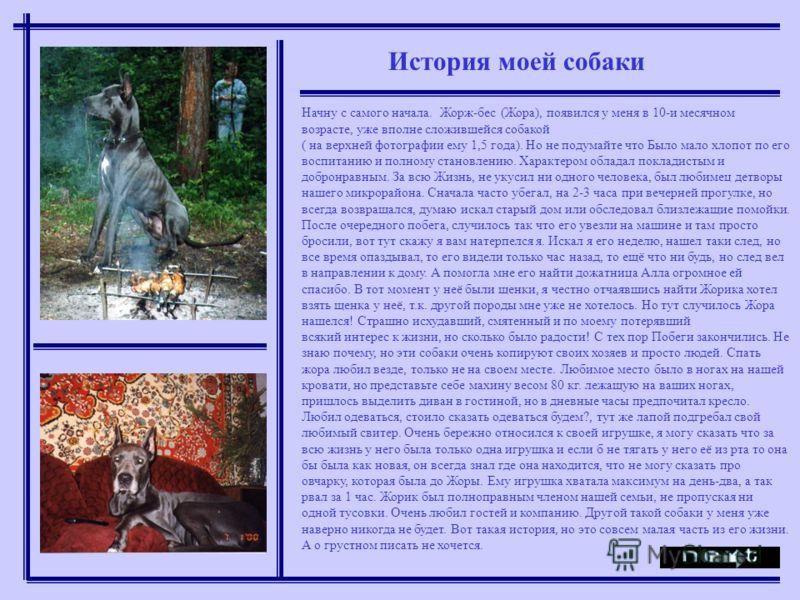 История моей собаки Начну с самого начала. Жорж-бес (Жора), появился у меня в 10-и месячном возрасте, уже вполне сложившейся собакой ( на верхней фотографии ему 1,5 года). Но не подумайте что Было мало хлопот по его воспитанию и полному становлению.
