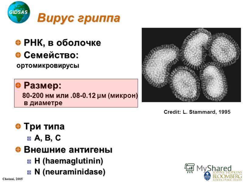 GIDSAS Chotani, 2005 Вирус гриппа РНК, в оболочке Семейство: ортомикровирусы ортомикровирусыРазмер: 80-200 нм или.08-0.12 80-200 нм или.08-0.12 μм (микрон) в диаметре Три типа A, B, C Внешние антигены H (haemaglutinin) N (neuraminidase) Credit: L. St