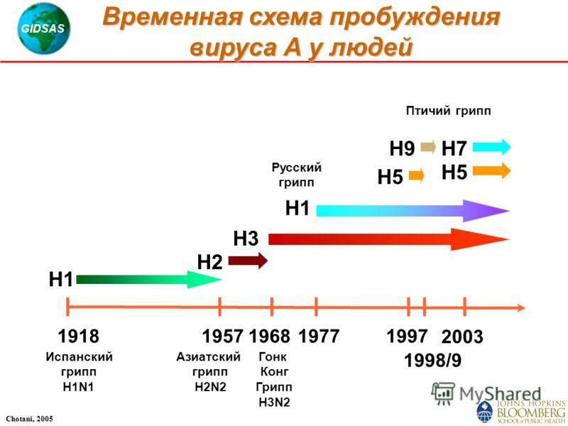 GIDSAS Chotani, 2005 19181957196819771997 1998/9 2003 H1 H3 H2 H7 H5 H9 Испанский грипп H1N1 Азиатский грипп H2N2 Русский грипп Птичий грипп Гонк Конг Грипп H3N2 Временная схема пробуждения вируса А у людей