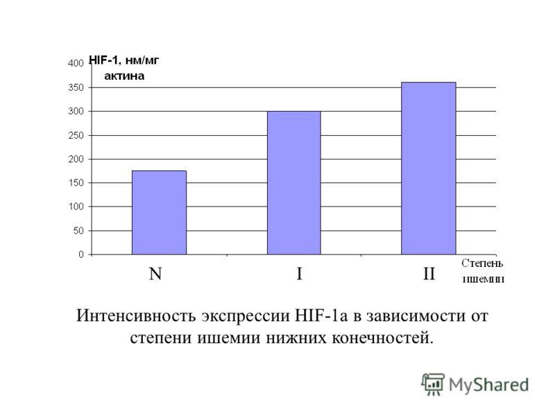 N I II Интенсивность экспрессии HIF-1а в зависимости от степени ишемии нижних конечностей.