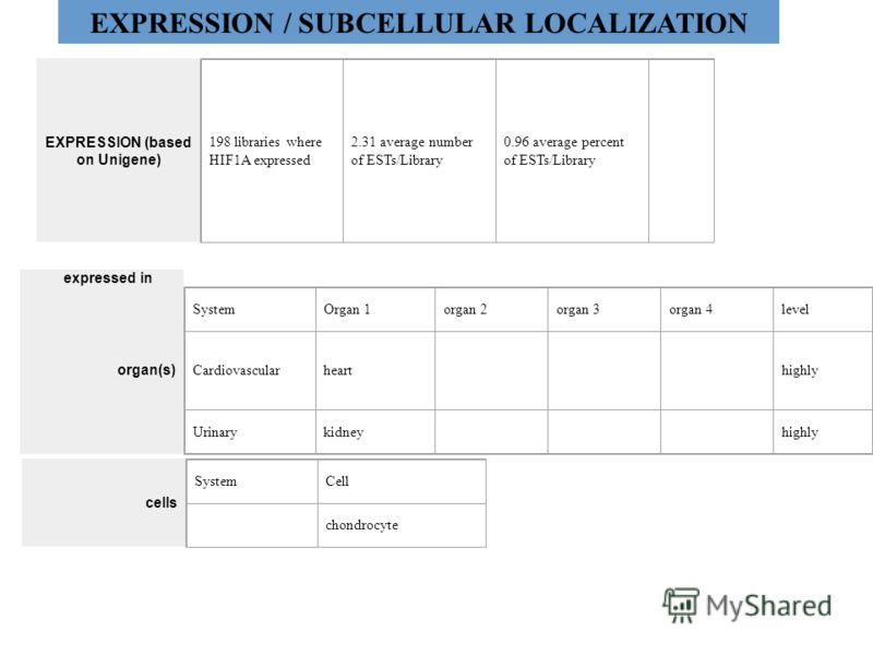 EXPRESSION / SUBCELLULAR LOCALIZATION EXPRESSION (based on Unigene) 198 libraries where HIF1A expressed 2.31 average number of ESTs/Library 0.96 average percent of ESTs/Library expressed in organ(s) SystemOrgan 1organ 2organ 3organ 4level Cardiovascu